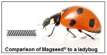 Magseed is comparable in size to a ladybug