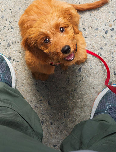 puppy wanting to go walking